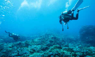 Diving Image