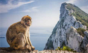 Macaque Experience Image